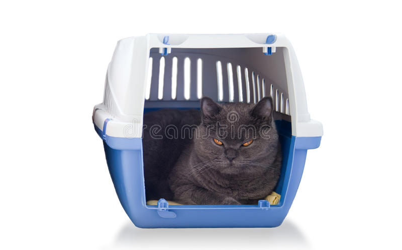 Download British Cat In A Carrying Box Stock Photo - Image: 36912628