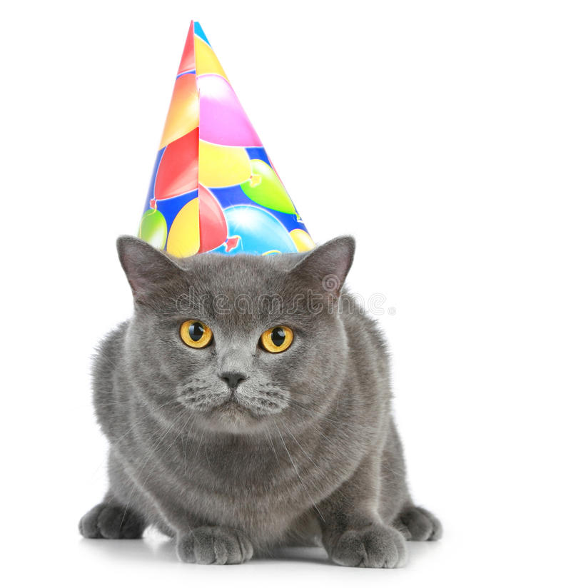 British cat with party hat. British cat with birthday party hat on a white background royalty free stock photo