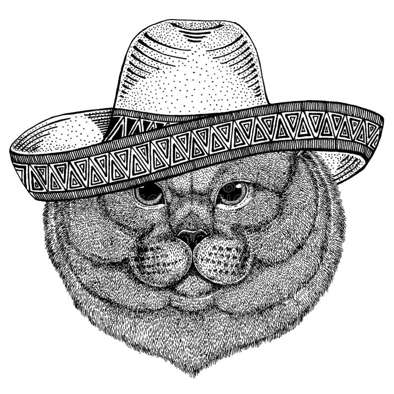 British cat wearing traditional mexican hat. Classic headdress, fiesta, party. British cat wearing traditional mexican hat. Classic headdress, fiesta, party vector illustration