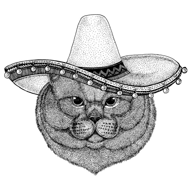 British cat wearing traditional mexican hat. Classic headdress, fiesta, party. Cat wearing traditional mexican hat. Classic headdress, fiesta, party royalty free illustration