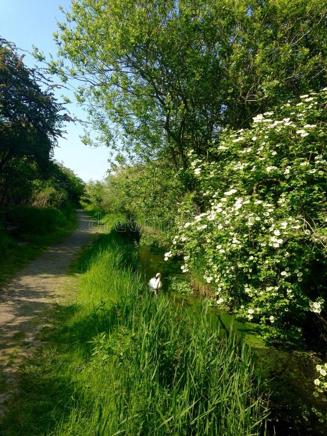 British chalk stream in late May royalty free stock photography