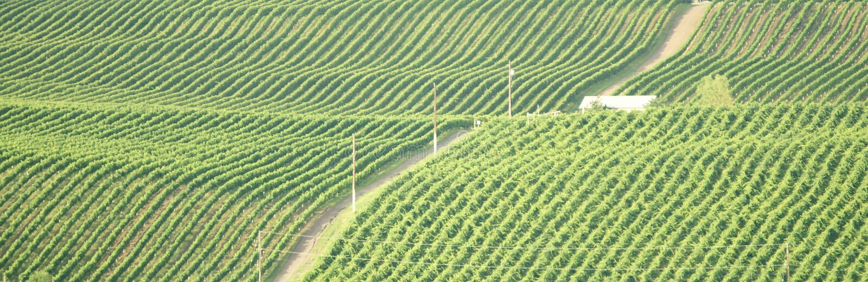 British Columbia Vineyard Okanagan Stock Photo