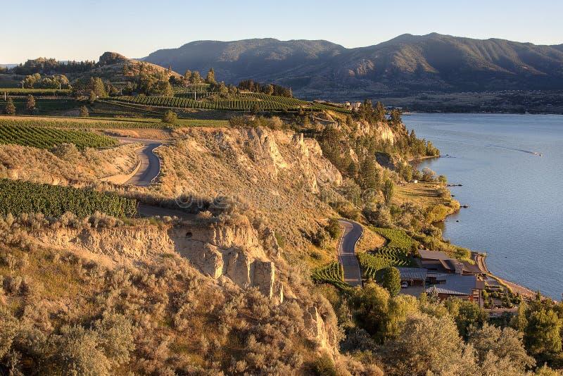 British Columbia Vineyards royalty free stock photos