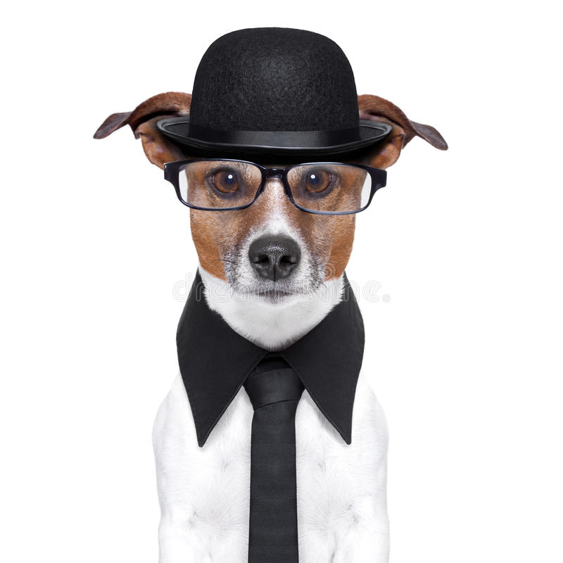 British dog. With black bowler hat and black suit royalty free stock photo