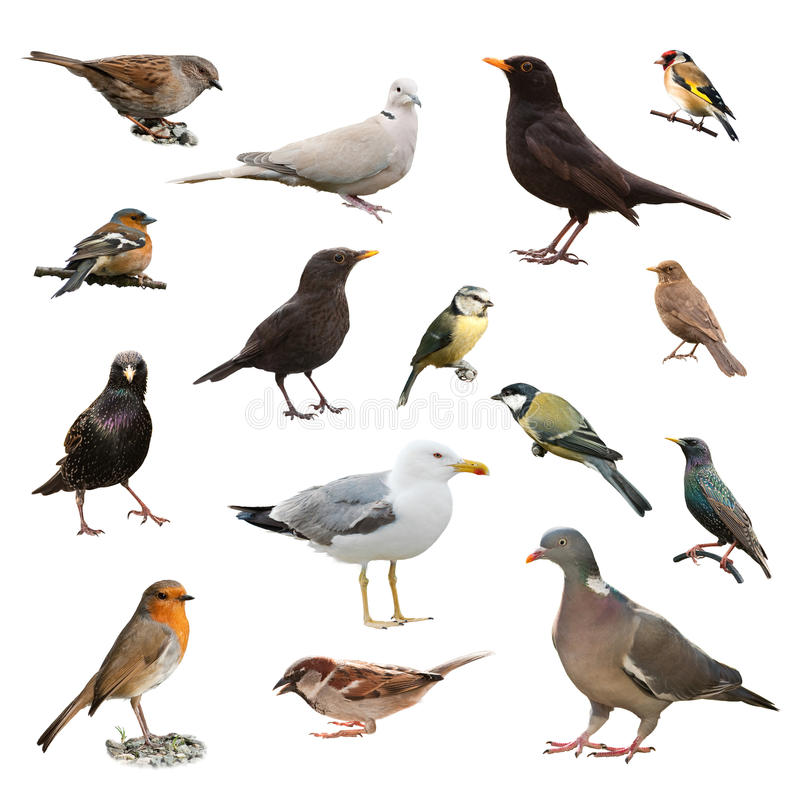 British Garden Birds stock photos