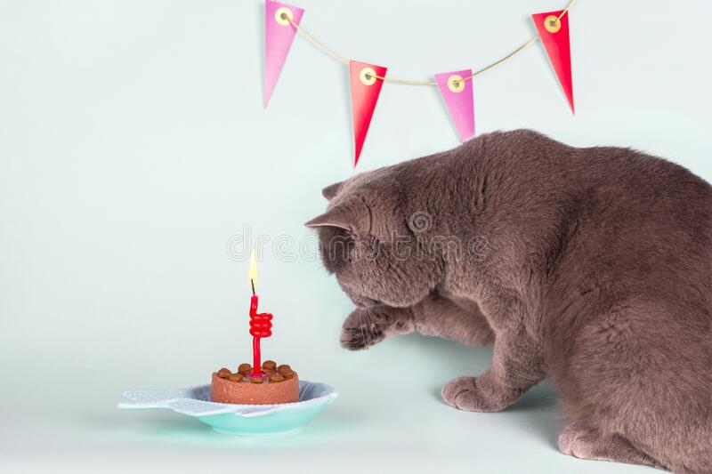 Kitty Cat Birthday Party Invitation Photos - Free & Royalty-Free Stock  Photos from Dreamstime