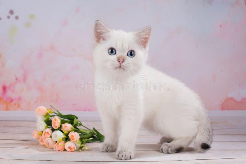 British Kitten With Flowers Stock Photo - Image of mining, hunting ...