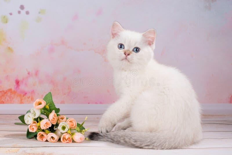 British Kitten With Flowers Stock Image - Image of flowers, predator ...