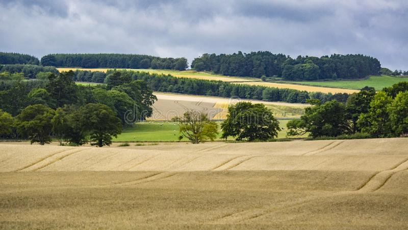 British pastoral scenery. In the outskirts of many British towns, the green trees are forested, the green grass is shaded, the cattle and sheep are in groups stock photography