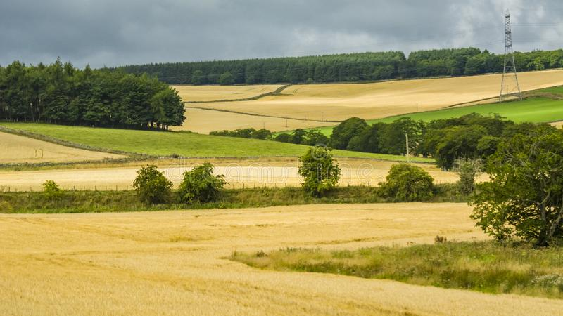 British pastoral scenery. In the outskirts of many British towns, the green trees are forested, the green grass is shaded, the cattle and sheep are in groups stock image