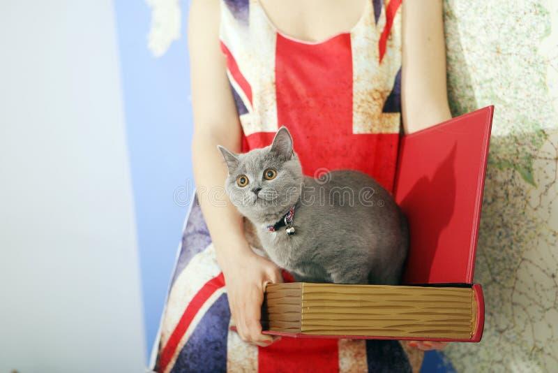 British Shorthair baby. British Shorthair kitten in a box, book-shape, Europe map background stock image