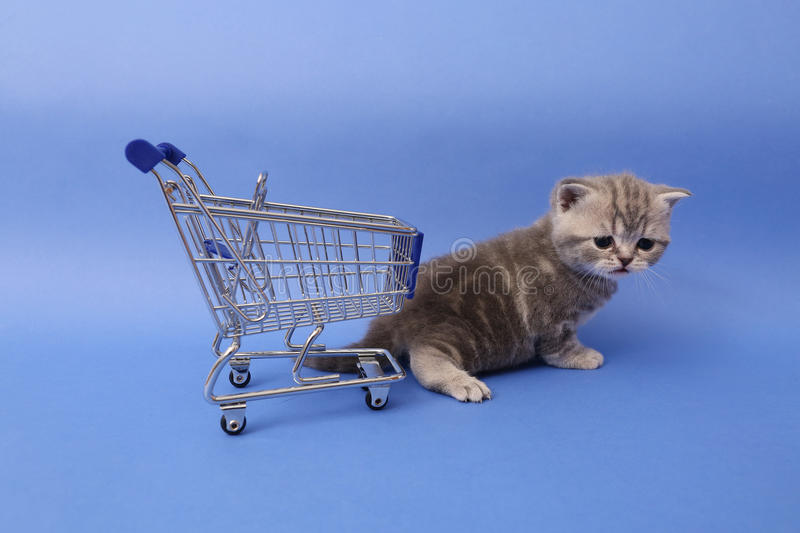 British Shorthair baby. Baby kitten near a shopping cart, one week old stock photo
