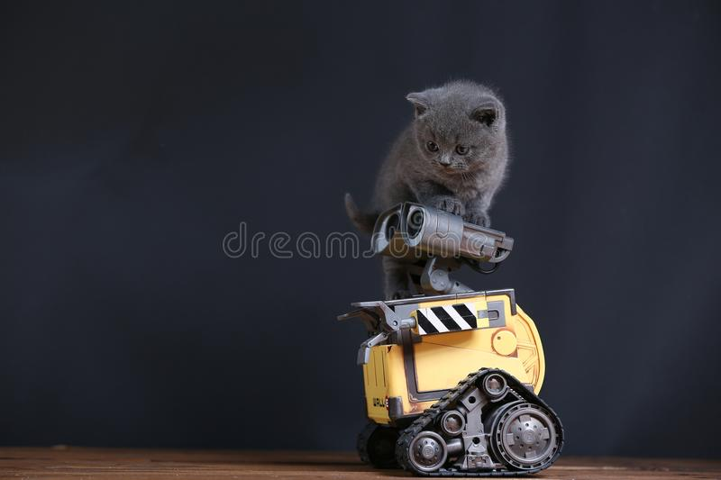 Kitten and a robot royalty free stock photo