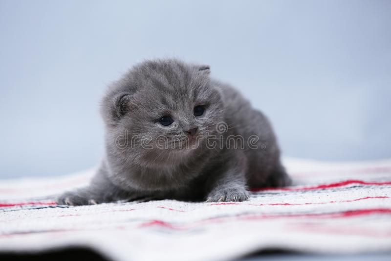 Kittens sitting on small carpet, cute face royalty free stock image