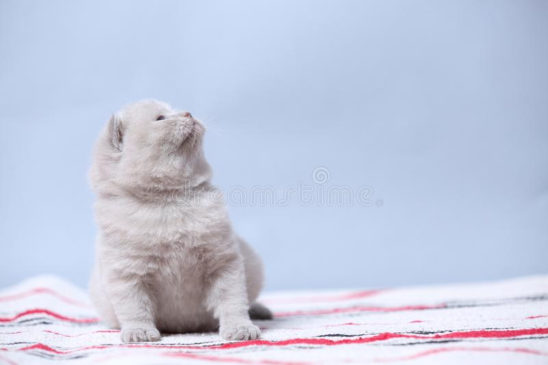 Kittens sitting on small carpet, cute face stock image