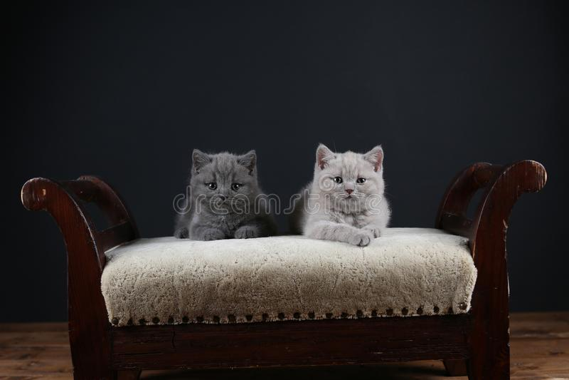 Kittens sitting on a stool, closeup view stock photos