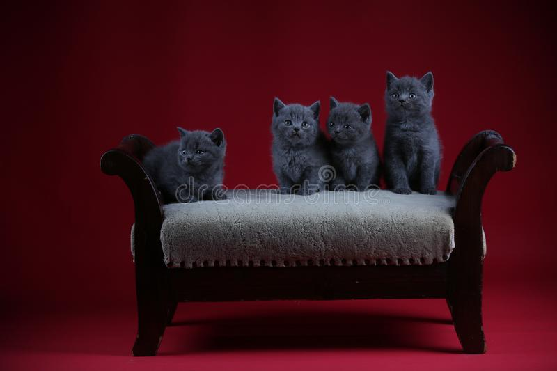 Kittens sitting on a vintage stool, red background stock photography