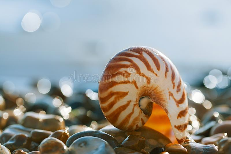 British summer beach with nautilus pompilius sea shell. With glittering sea wave stock image