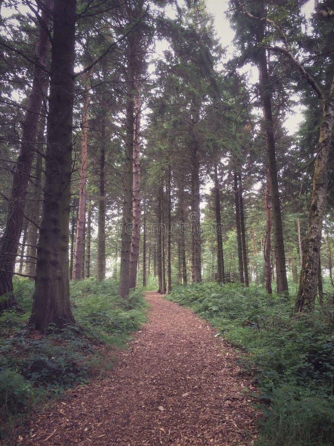 British woodland stock image