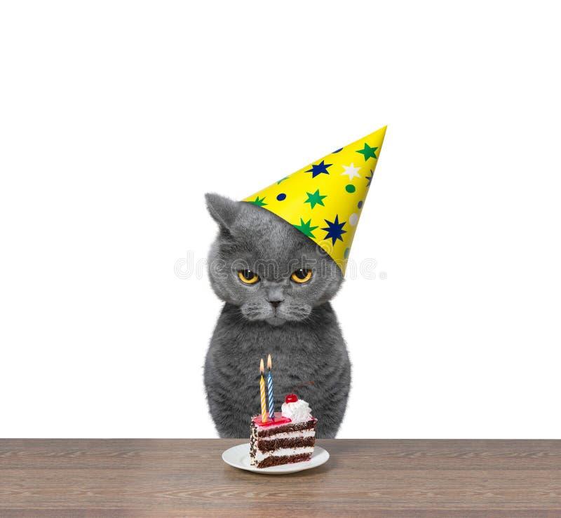 Britse kat het vieren verjaardag met stuk van cake royalty-vrije stock afbeeldingen