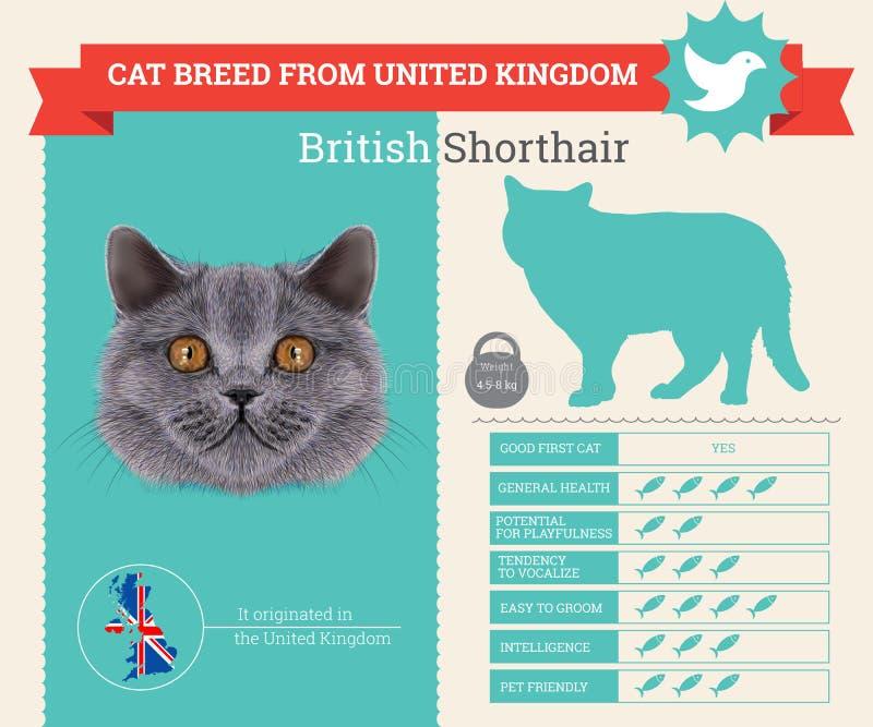 Britse Shorthair-infographics van het Kattenras royalty-vrije illustratie