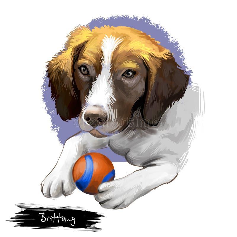 Brittany psa traken odizolowywający na białego tła sztuki cyfrowej ilustracji Brittany traken armatni pies hodował pierwotnie dla ilustracji