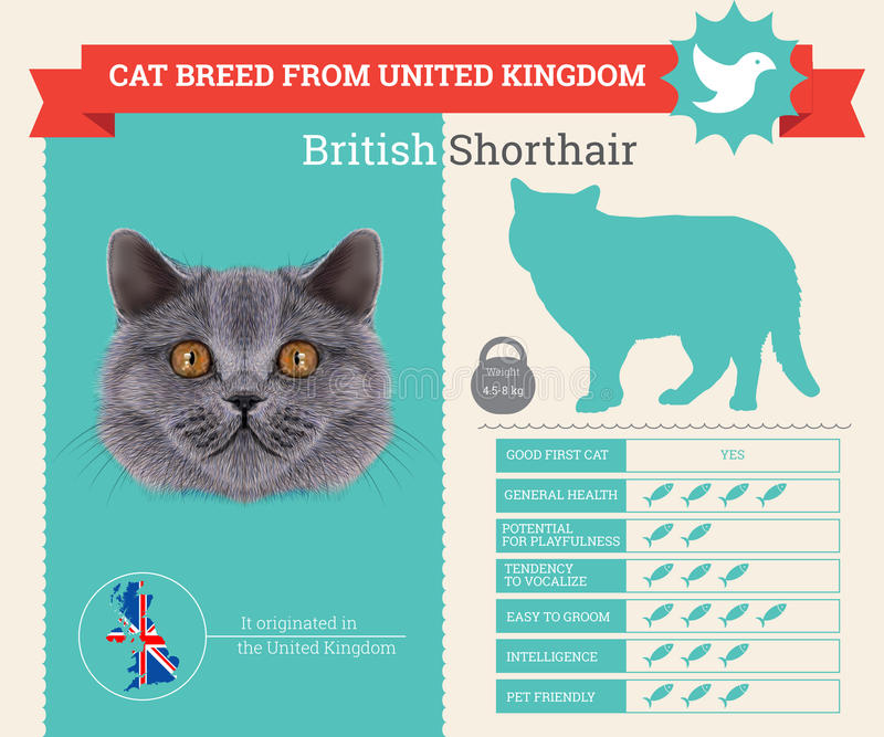 Download Brittisk Infographics För Shorthair Kattavel Stock Illustrationer - Illustration av pott, öron: 76703598