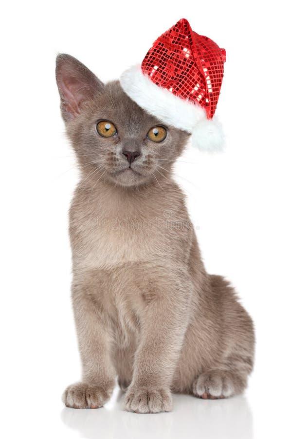 Download Brittisk Kattunge I Jultomtenhatt Fotografering för Bildbyråer - Bild av gulligt, xmas: 78726385