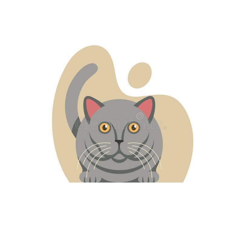 Brittisk Shorthair katt på vit bakgrund Vektorillustra royaltyfri illustrationer
