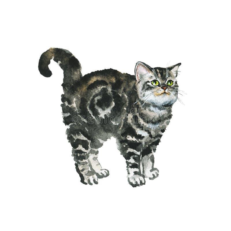 Brittisk shorthairkatt för vattenfärg stock illustrationer