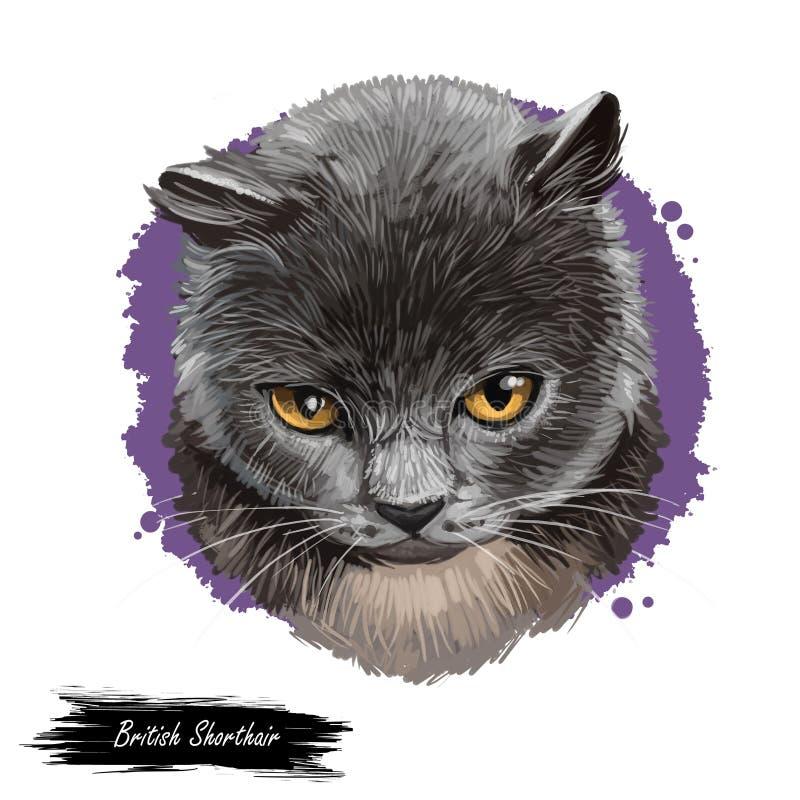 Brittisk shorthairkatt som isoleras p? vit bakgrund Digital konstillustration av utdragen pott för hand för rengöringsduk Kort ha royaltyfri illustrationer
