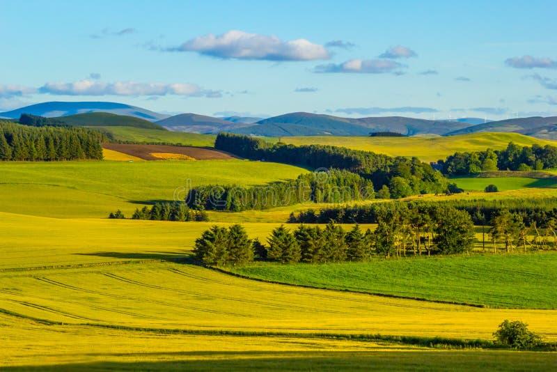 Brittiskt landskap i sommar royaltyfria foton