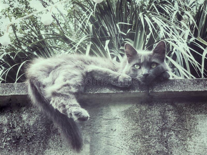 Brividi grigi del gatto sul bordo fotografia stock