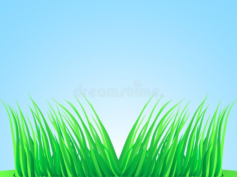 Briznas de la hierba enorme. ilustración del vector
