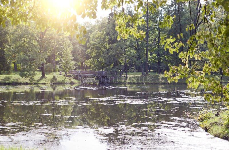 Bro över dammet som är bevuxet med en andmat 24 för petersburg för park för nobility för km för catherine besök för tsarskoye för royaltyfria foton