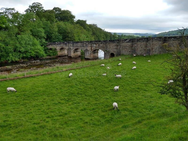 Bro över floden Wharfe, Wharfedale, Yorkshire dalar, England royaltyfri bild