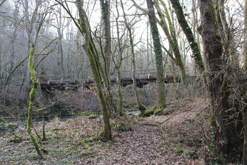 Bro över flodhoträd royaltyfri foto
