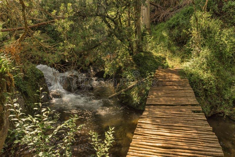 Bro över ström på Yellowwoodskogen som fotvandrar slingan, Injisu royaltyfria foton