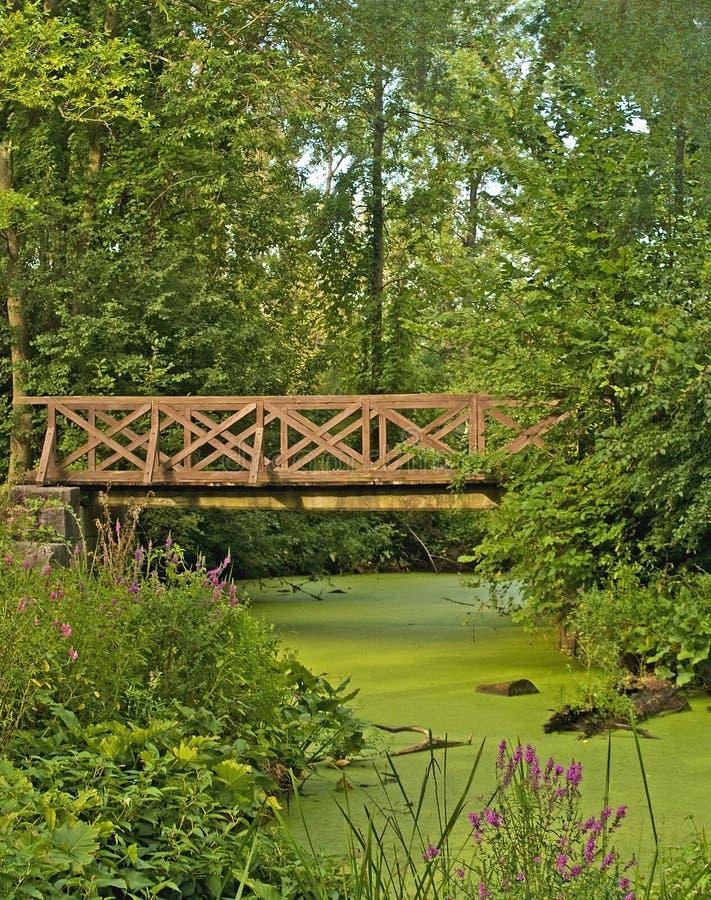 Bro över Swamp Arkivbilder