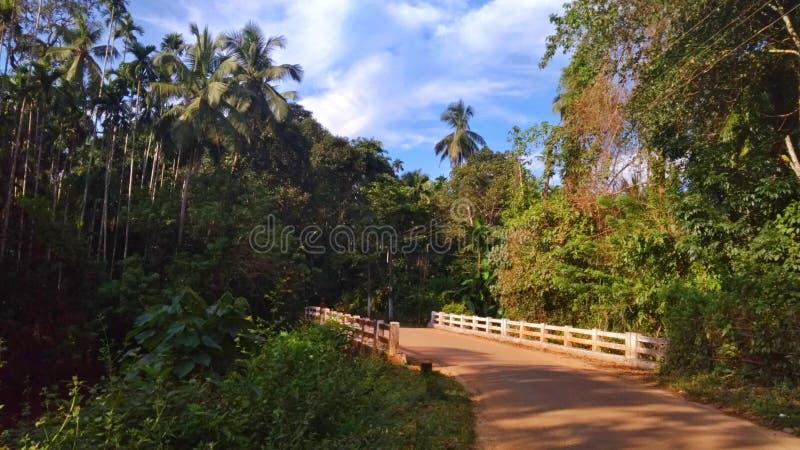 Bro av naturen arkivbilder