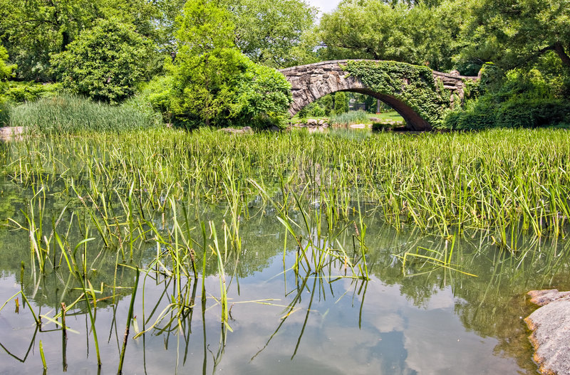 bro Central Park fotografering för bildbyråer