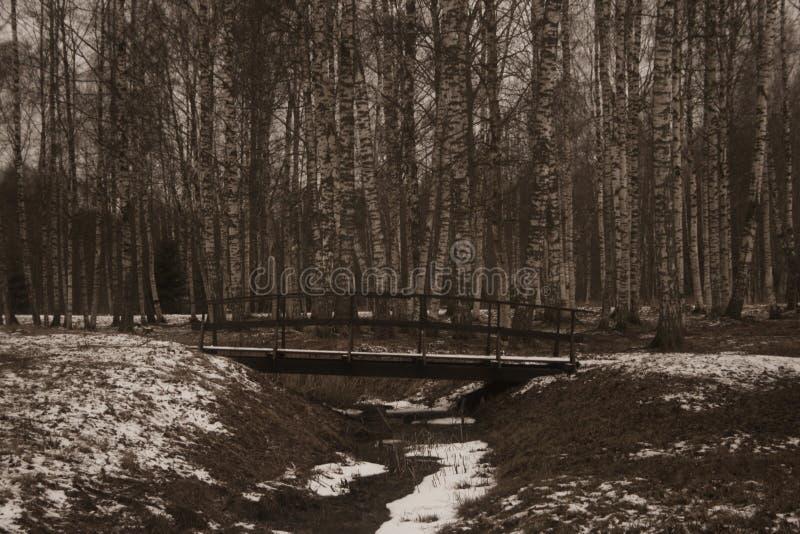 Bro i en skog royaltyfria foton