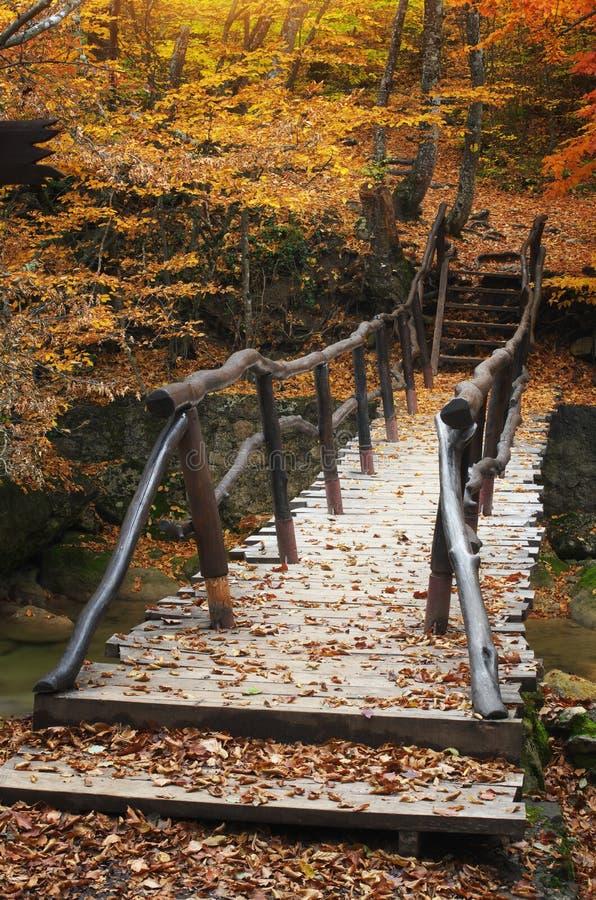 Bro i höstskog royaltyfria foton