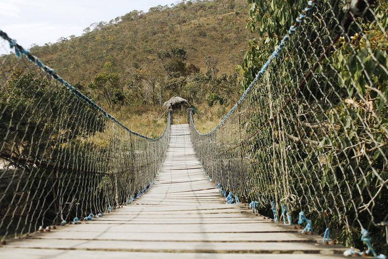 Bro i naturlig sammansättning för ljus skog _ arkivbilder