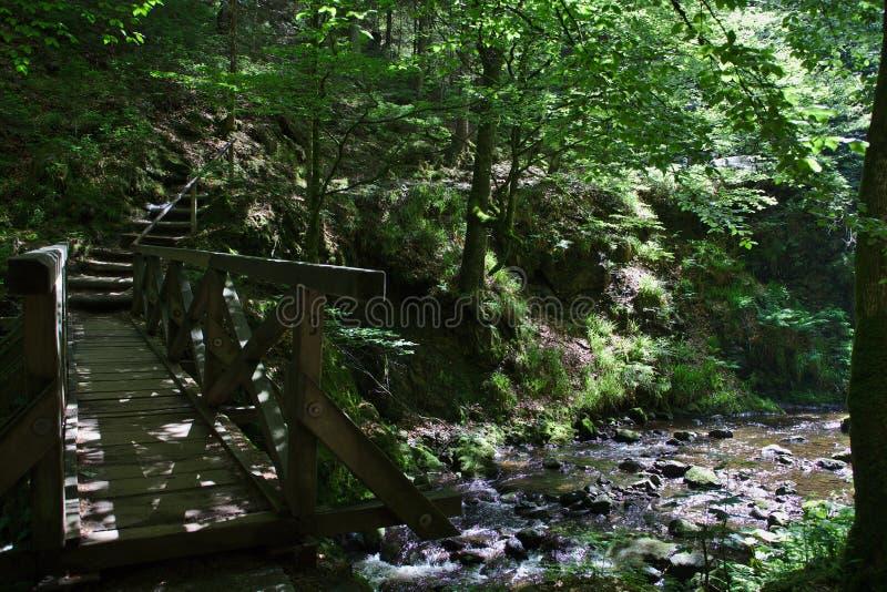 Bro med floden och trappa i skogen av ravennaschluchten arkivbild