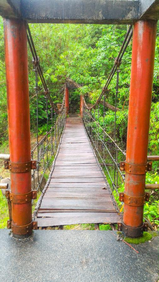 Bro upphängning, bakgrund, trä som är tropisk, skog, gräsplan som är röd, sommar, träd, lopp, landskap som är utomhus- royaltyfri fotografi