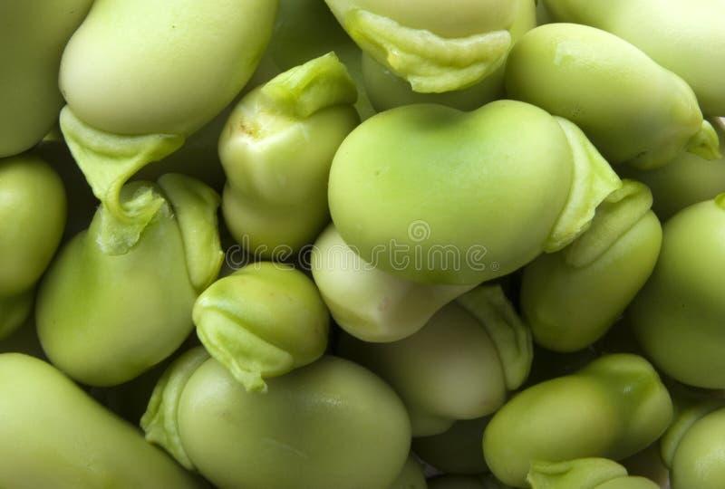Broad bean royalty free stock photos