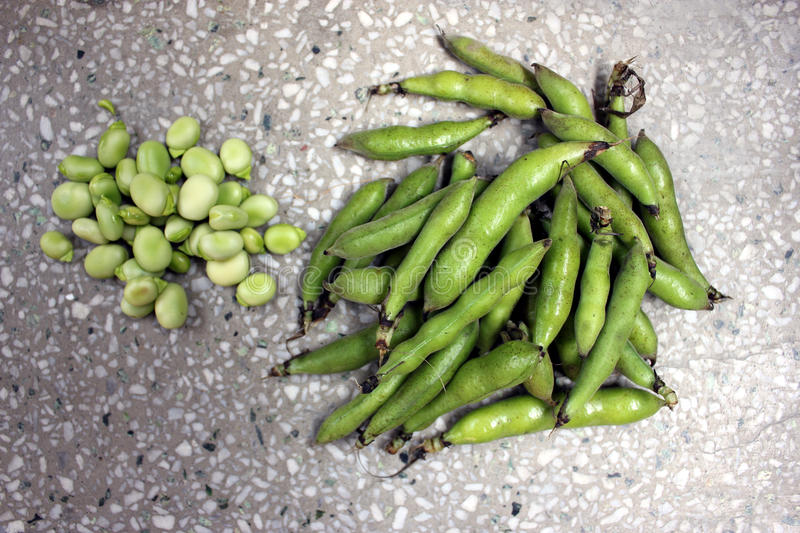 Download Broad bean, faba bean stock image. Image of vicia, seeded - 38217125
