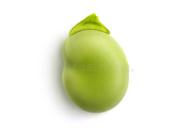Broad bean royalty free stock photos