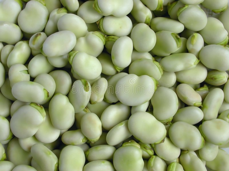 Download Broad Beans stock image. Image of agriculture, nutrition - 11279